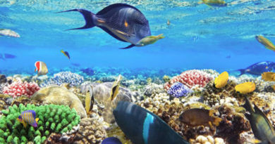 Climate Change Effects On Marine Species